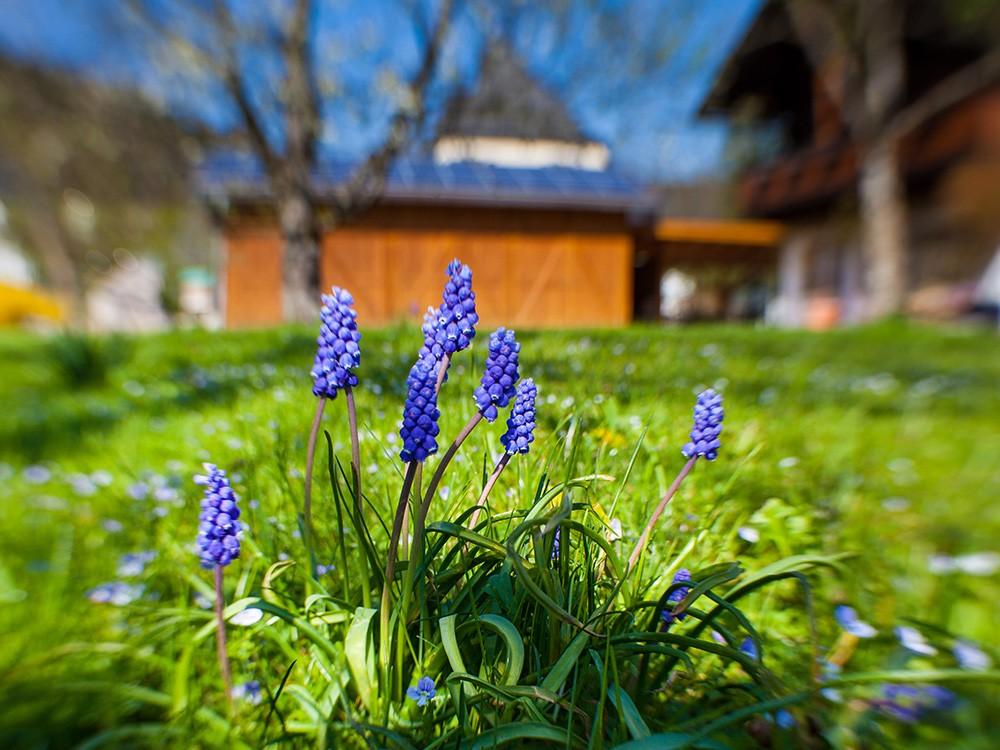 Gästehaus Pfingstlerlehen Frühlingsblüher