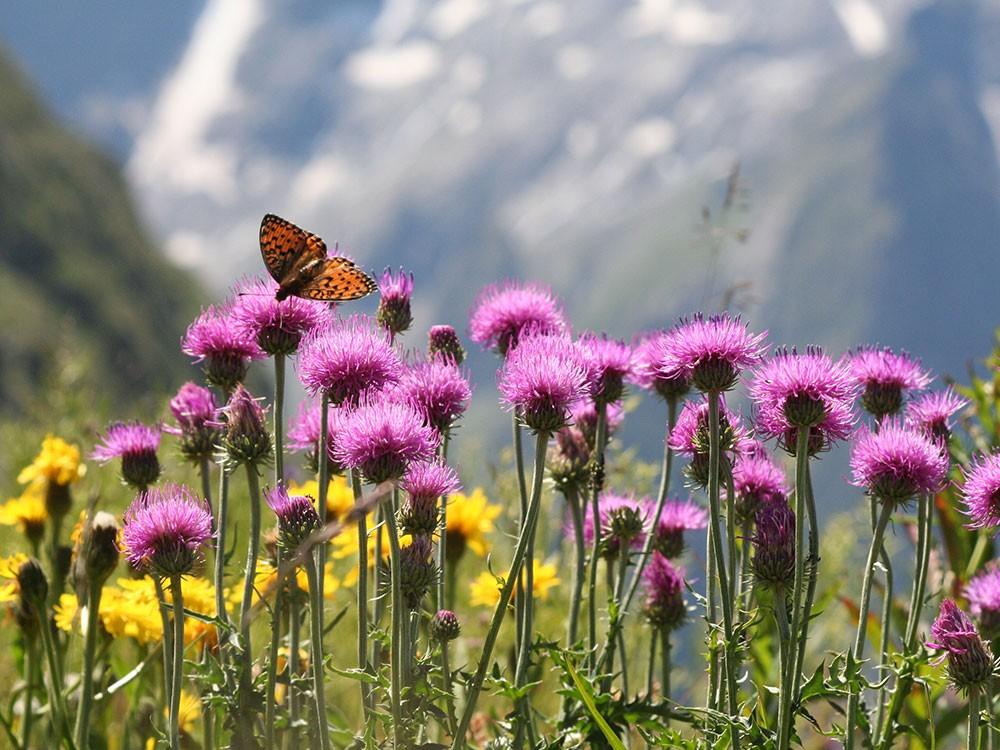 Blumenwiese Berchtesgaden