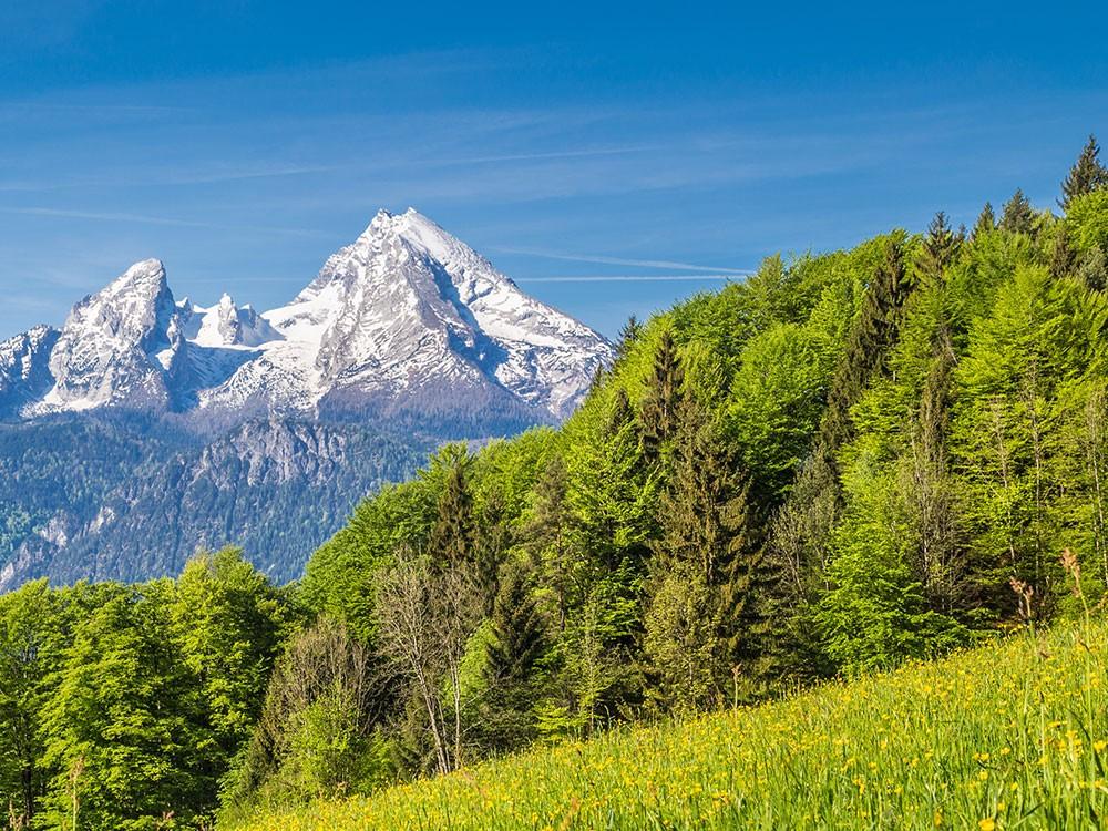 Watzmann - Berchtesgadener Land  im Frühsommer
