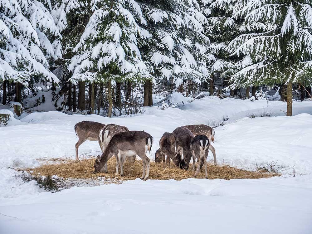 Wildfütterung - Nationalpark Berchtesgaden
